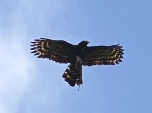 THe Black Hawk's Black Hawk :-)